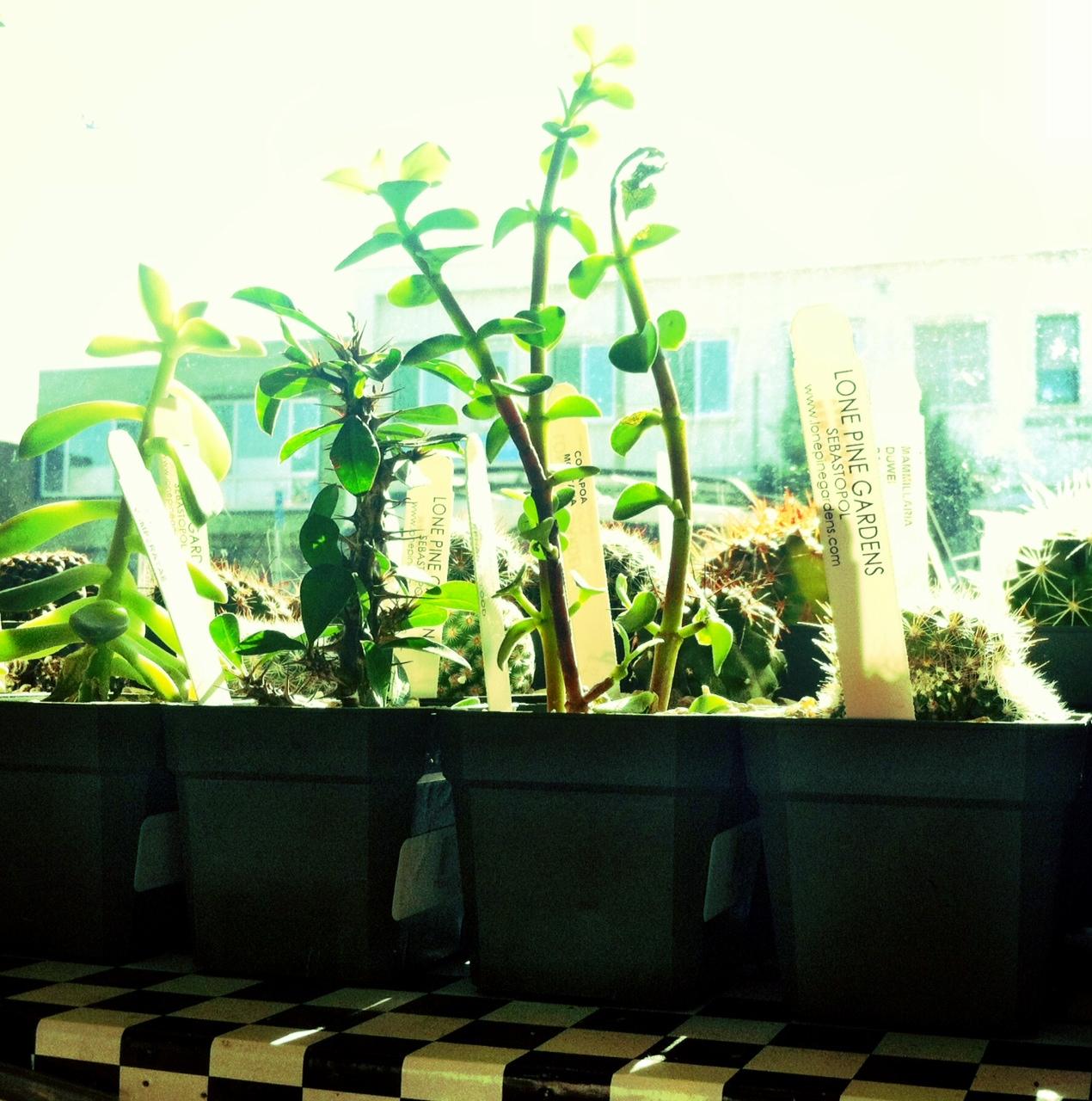 Lone Pine Gardens 3
