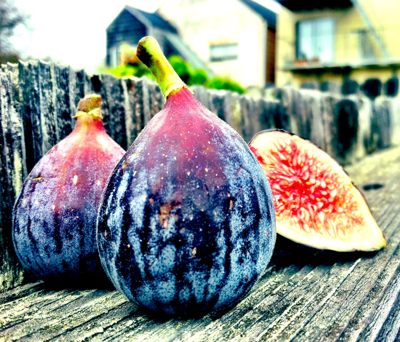 black turkey figs