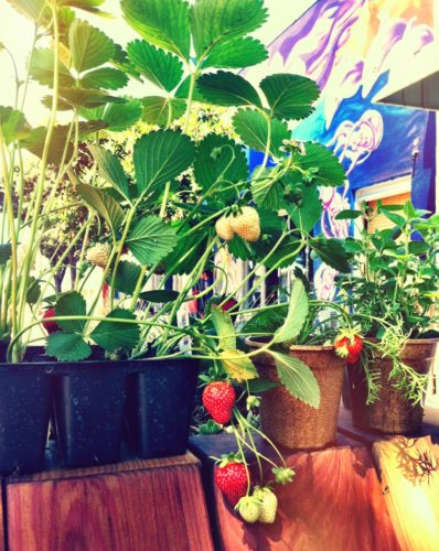 Plants-for-sale-at-OA